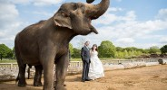 137 bride-and-groom-with-elephant-woburn